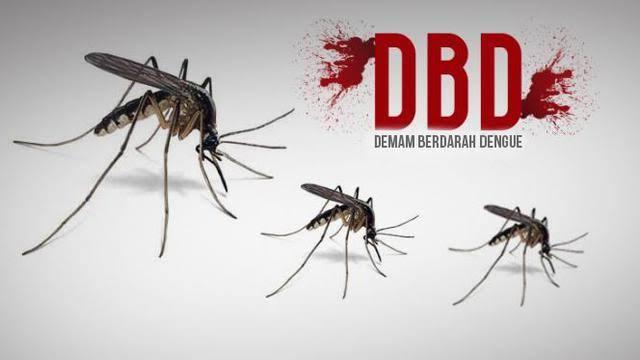 Pasien Penderita DBD di Dumai Meningkat  | Penderita-DBD
